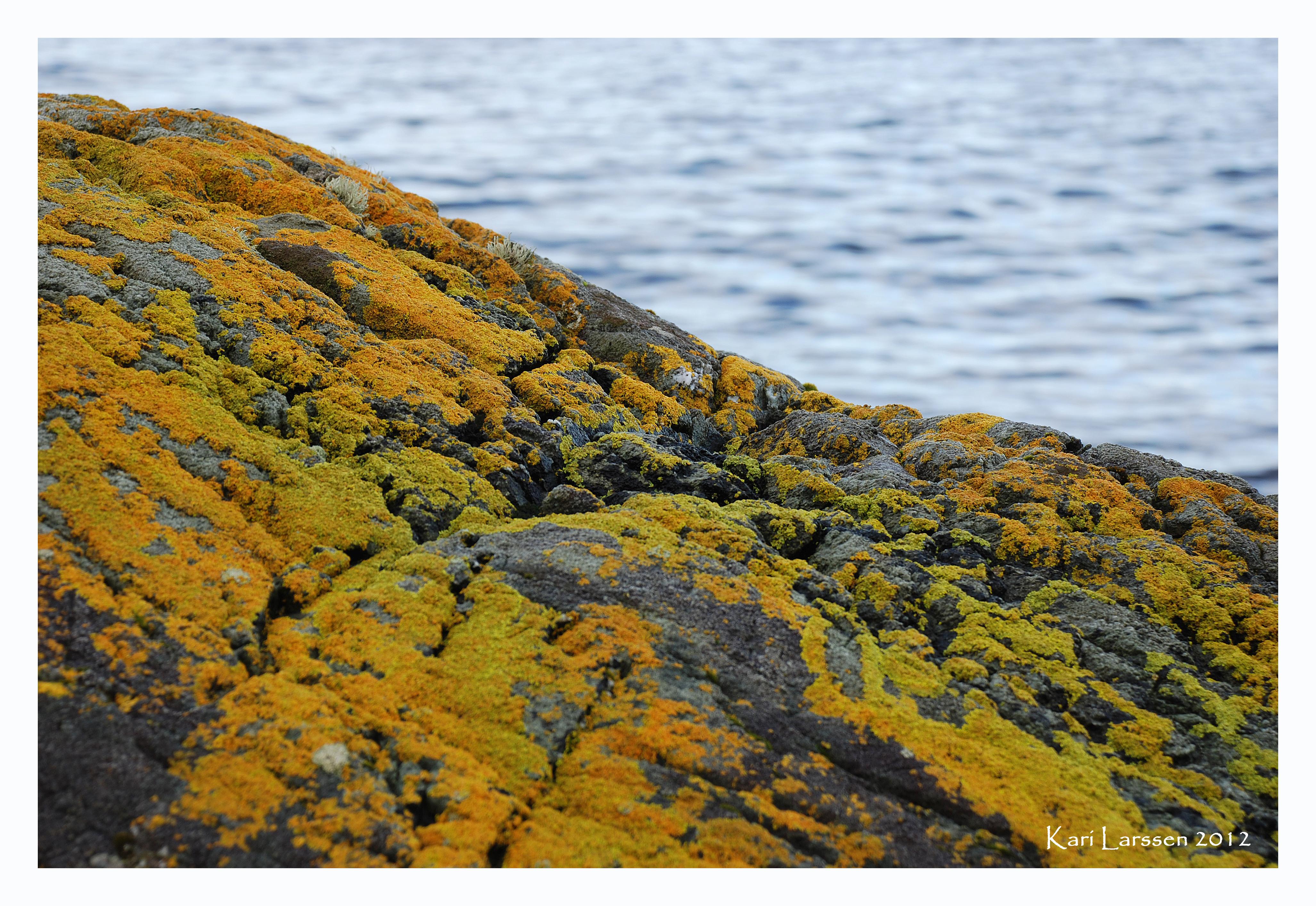 gul stein.jpg
