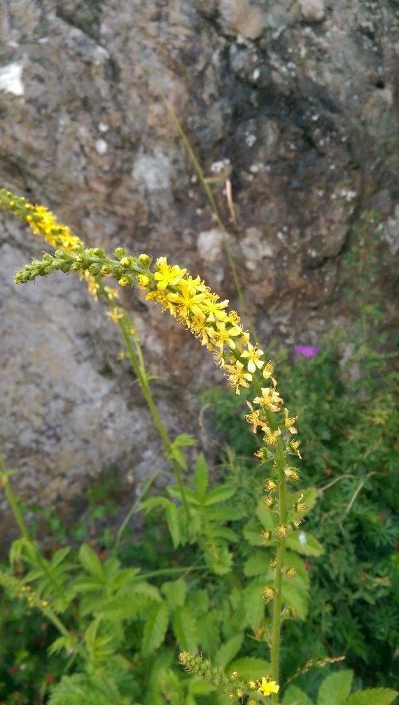 Truls Bie har tatt bilder av den rike flora som finnes på Espevær