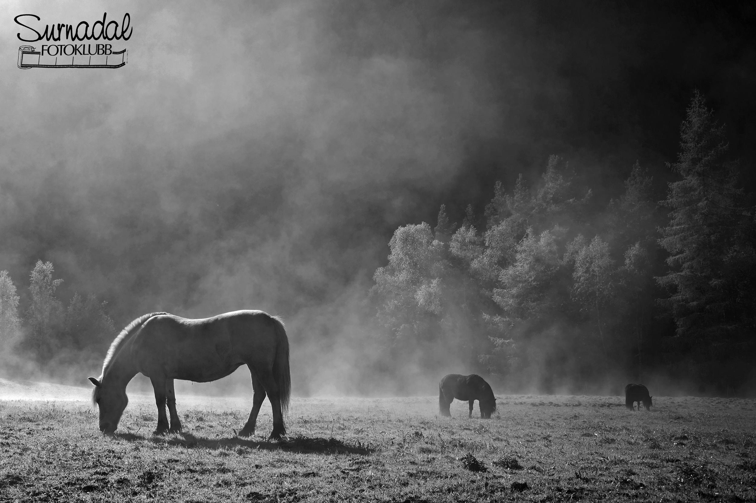 Hestmorgen