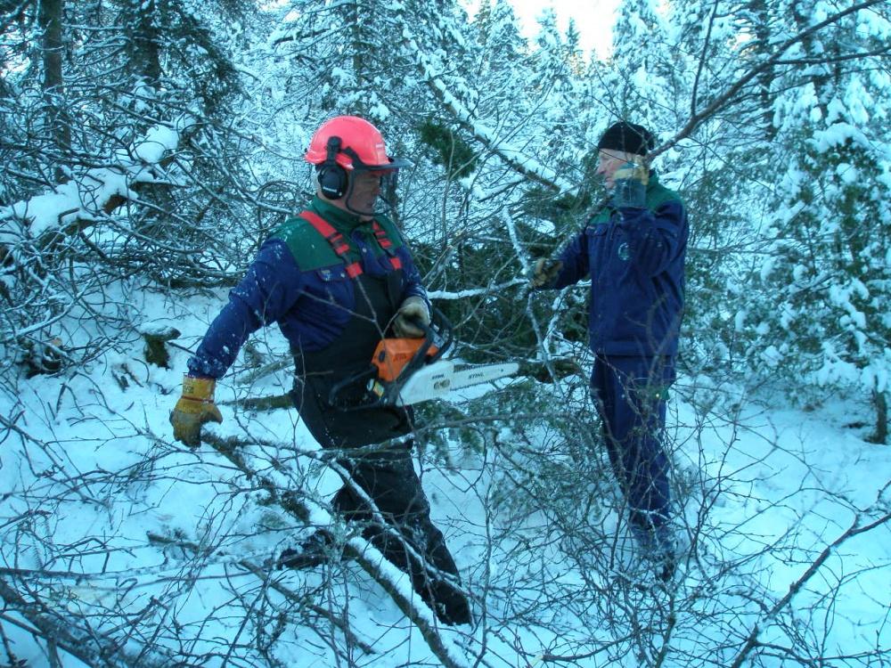 Tynning av skogen langs Halvdan Griegsvei 2- 10.de