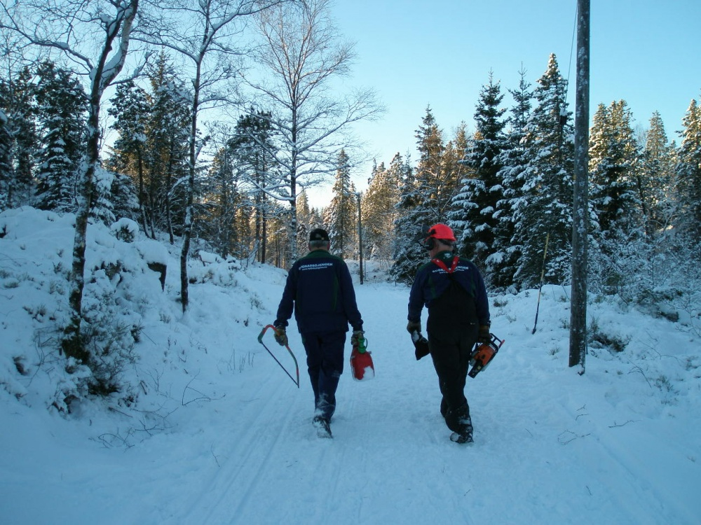 Tynning av skogen langs Halvdan Griegsvei 3- 10.de