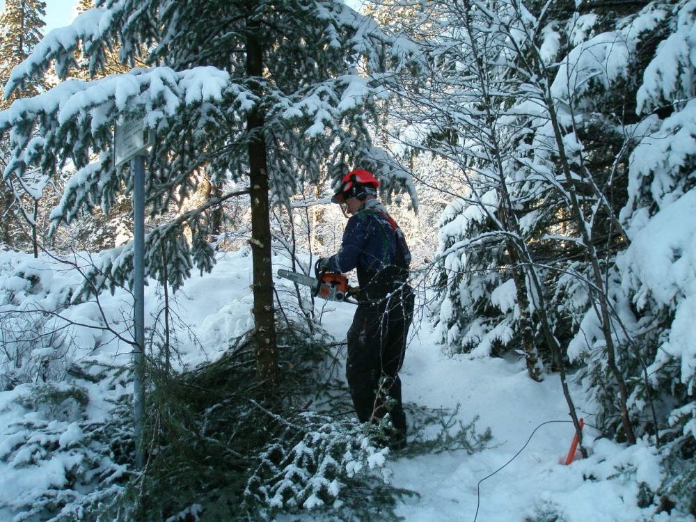 Tynning av skogen langs Halvdan Griegsvei 4- 10.de