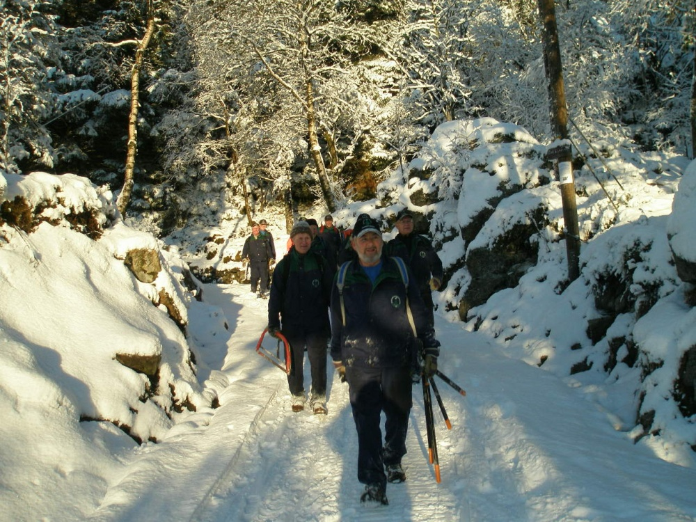 Tynning av skogen langs Halvdan Griegsvei 10.des.j