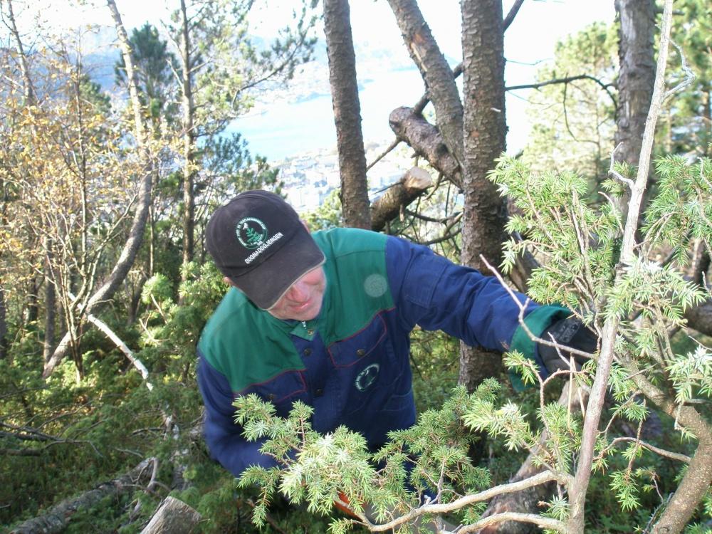 Opparbeidelse av ny sti ved Fløyvarden. 14.okt - 4
