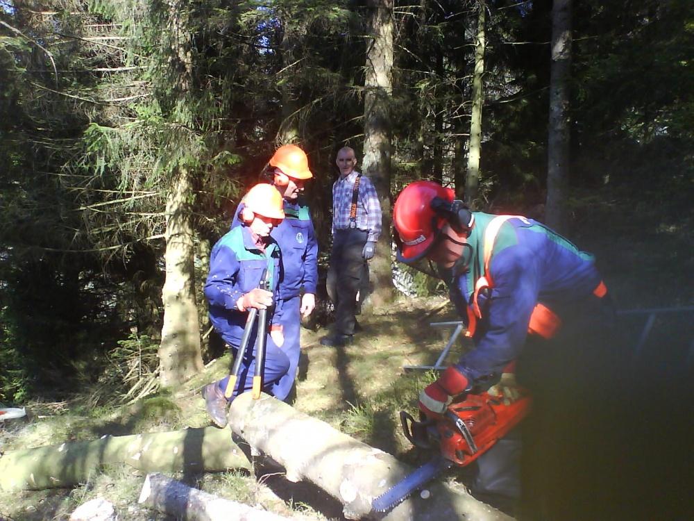 Felling av store trær Kamvei. 14.april.jpg