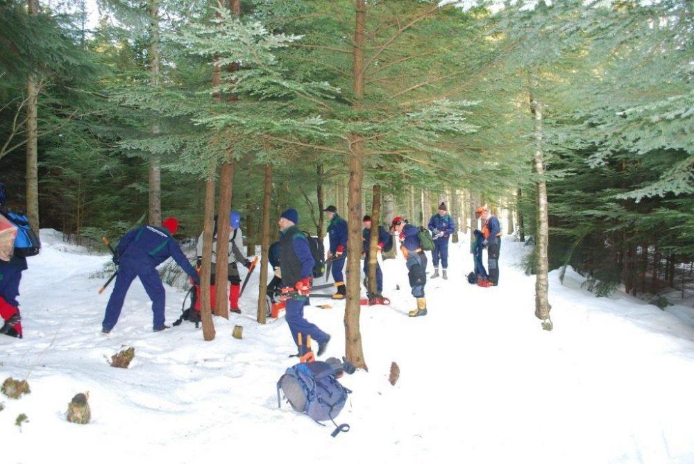 Rydding av skog sør for skomakerdiket 11.feb -2.(E