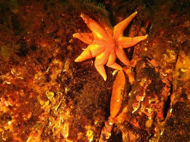 Sj_stjerne_og_krabbe.sized.jpg