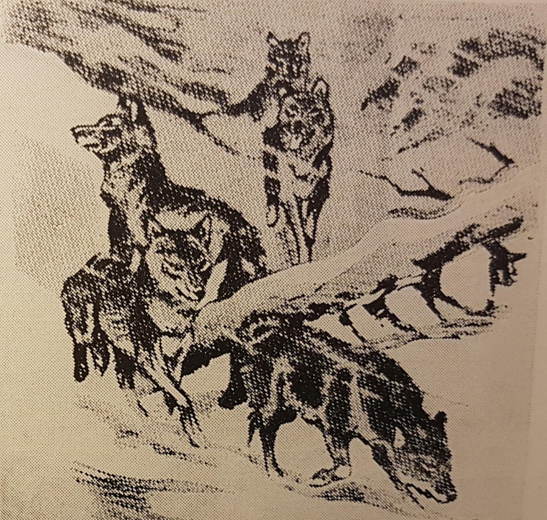ulveflokk_1972.jpg