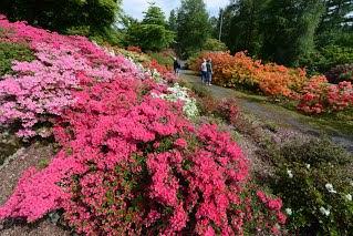 Foto fra hjemmesiden til Arboretes venner