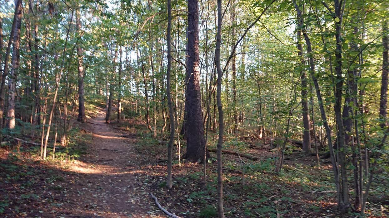 Snarvei gjennom skogen.jpg