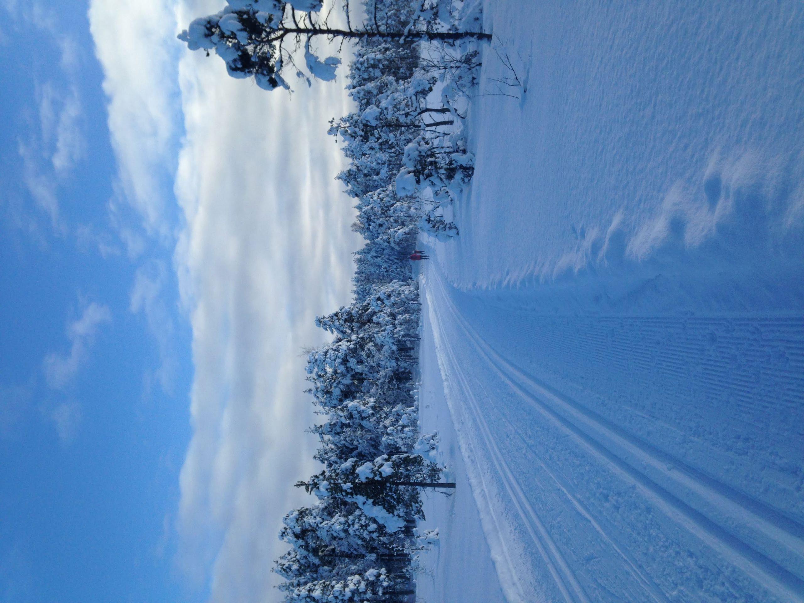Breimosen mot Breisjø i Gansdalen.JPG