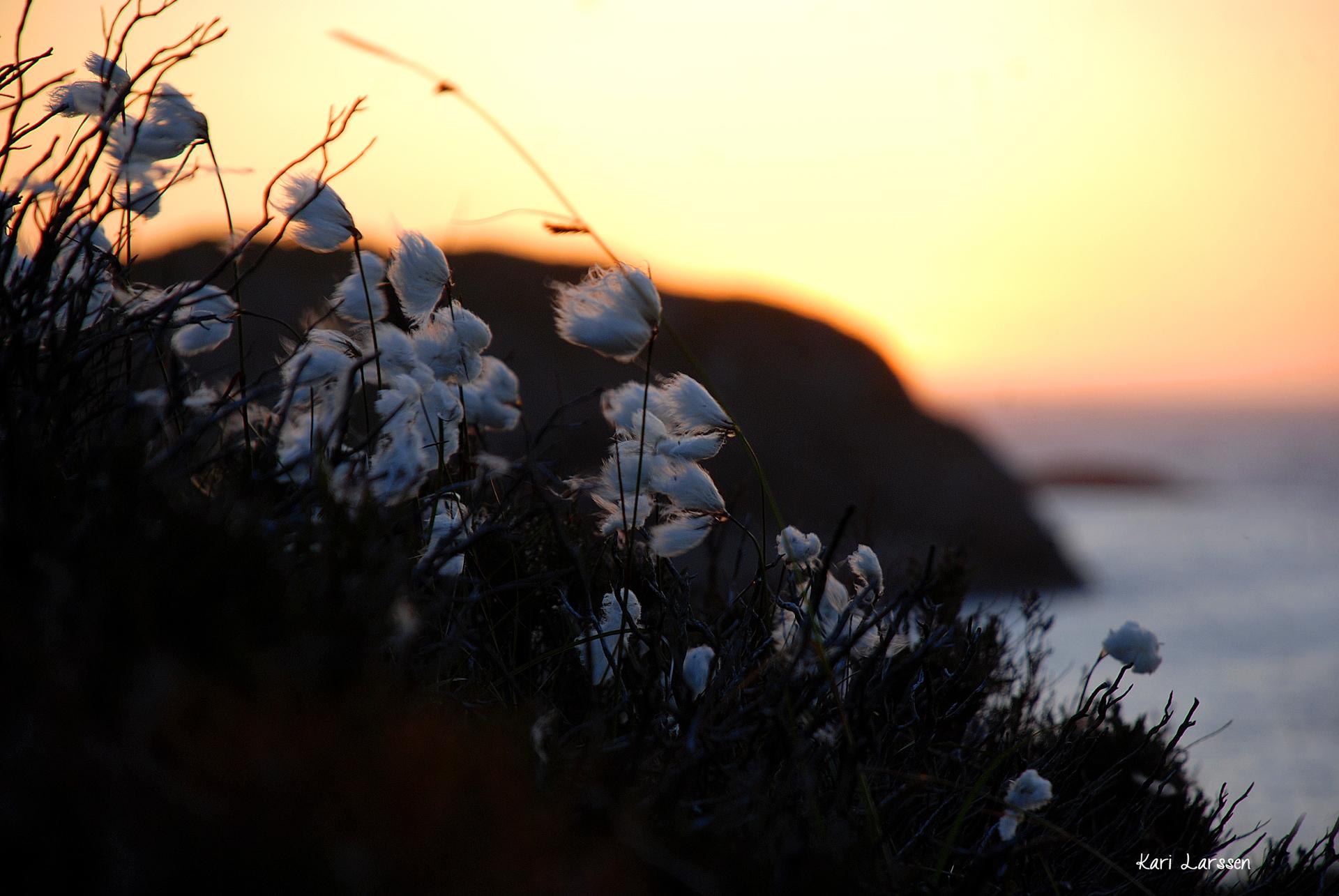 solnedgang 3.jpg