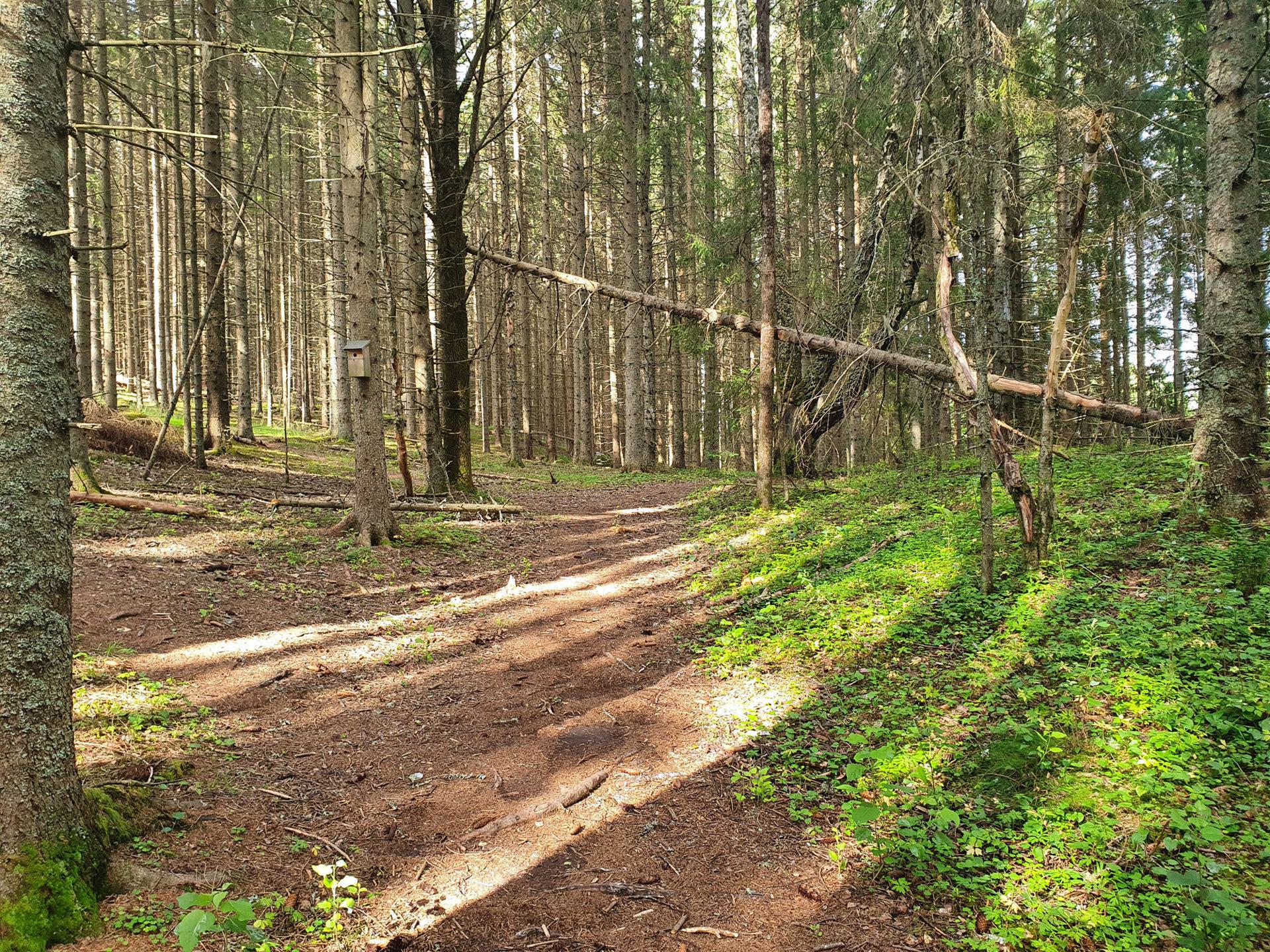 skogsti-med-sol1.jpg