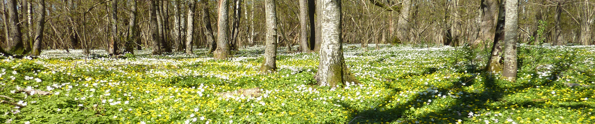 skogbunn.jpg