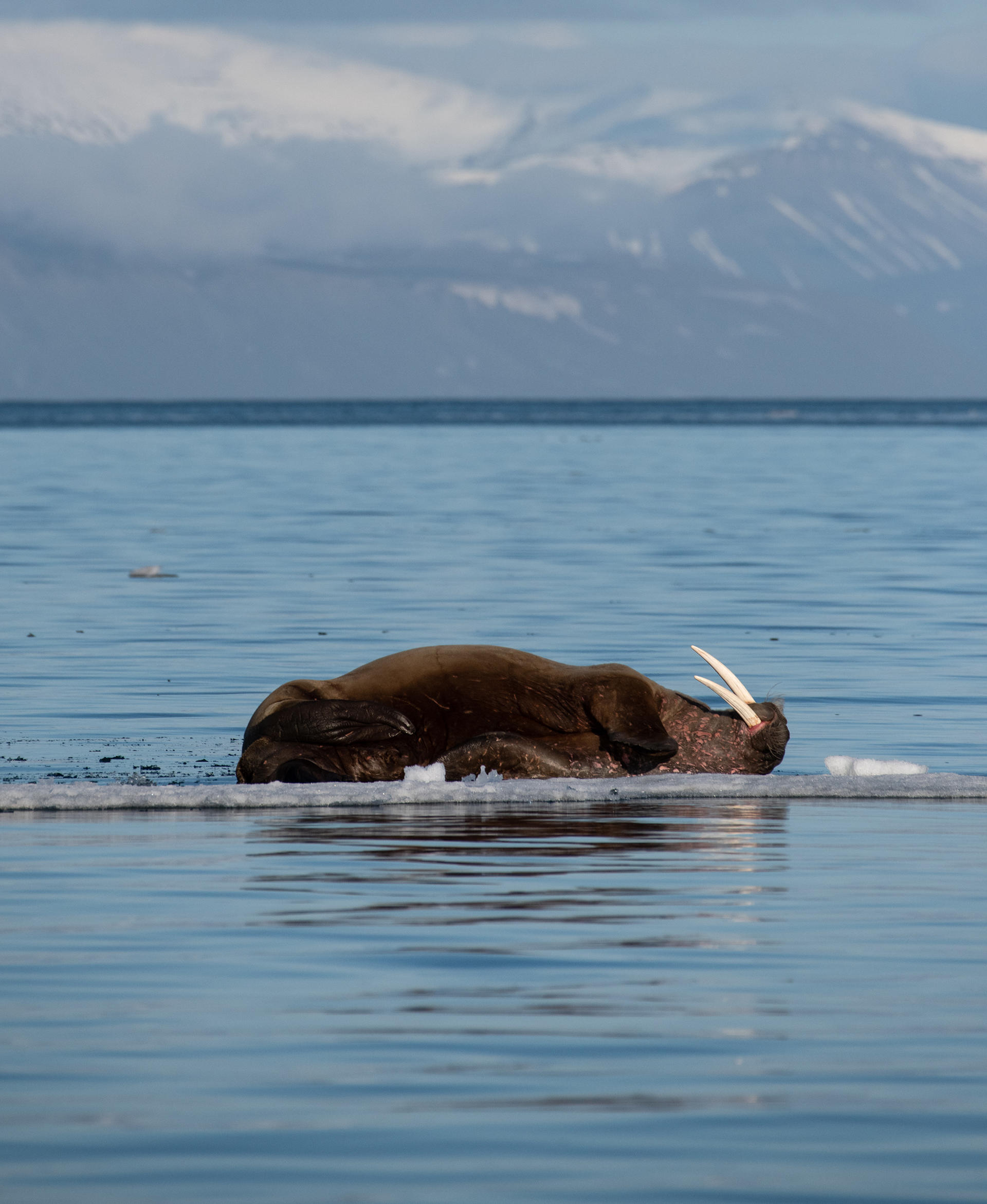 2020-08-Accepted-Solbading_pa_Svalbard-Ebba_T_Jens
