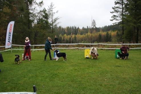 Bilder fra Høstutstillingen på Skauen Oktober 2020 alle bilder av Ingerlise  Oudenstad