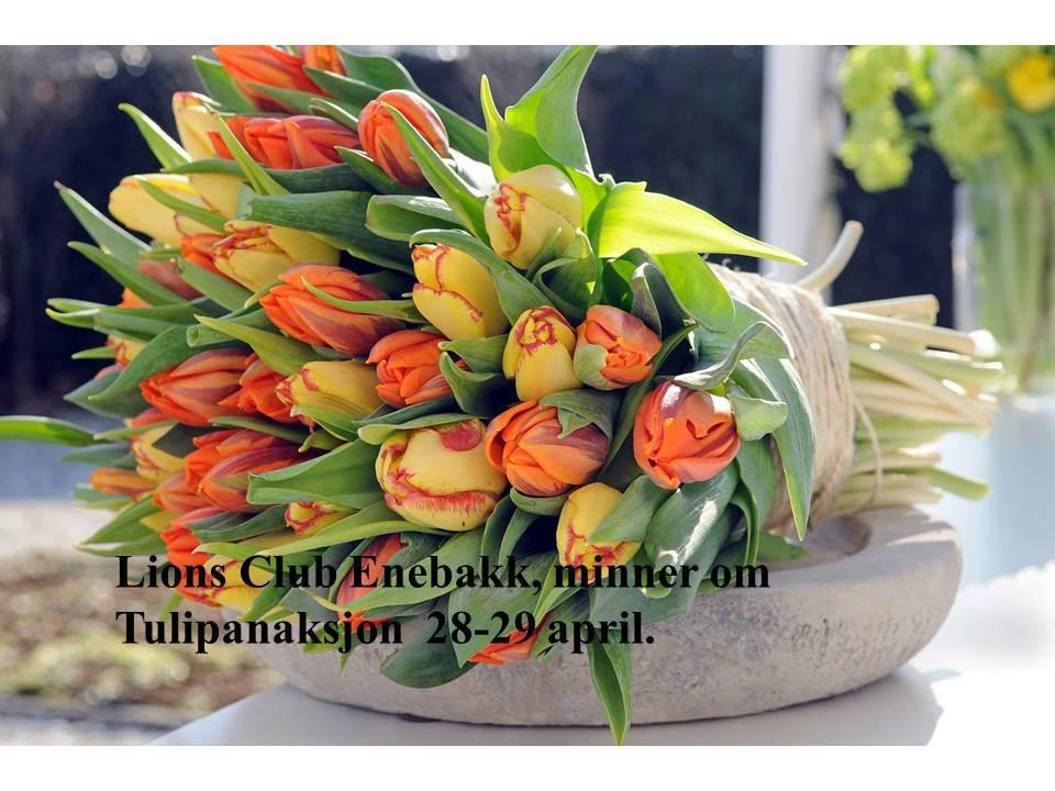 012 tulipan salg.jpg
