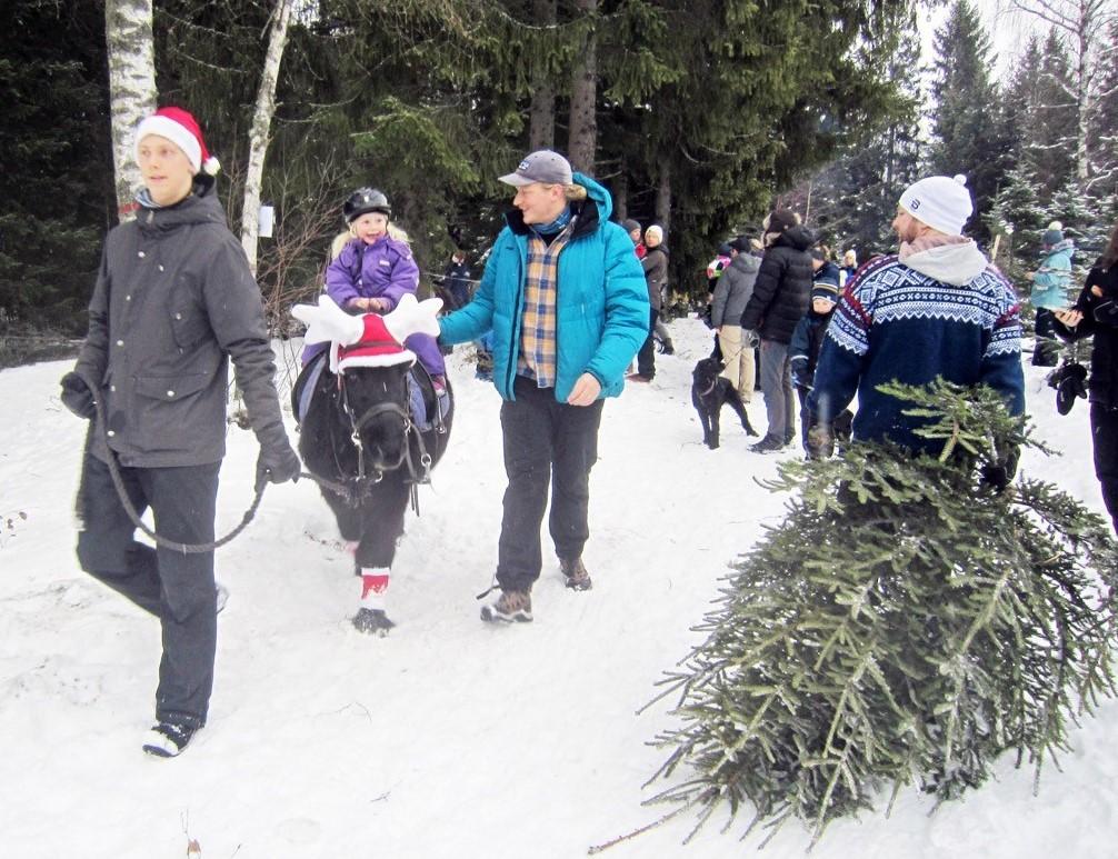 10 - Ponniridning og juletrær -18.jpg