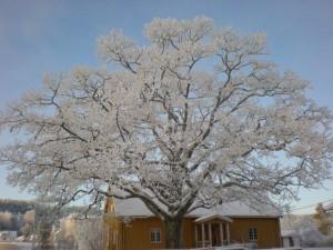 Eika i vinterskrud.jpg