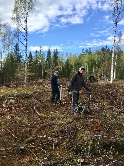 Skogplanting 1.jpg