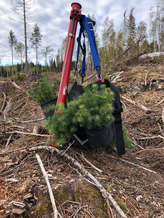 Skogplanting 3.jpg