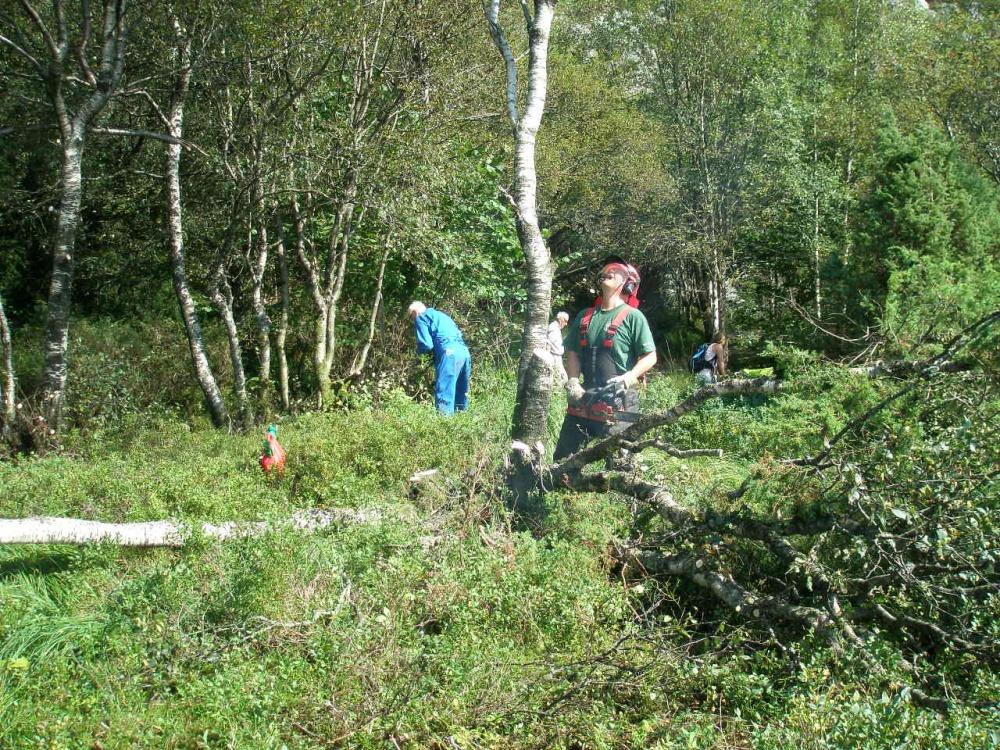 Søndre Kamvei rydding av skog 22-08.jpg