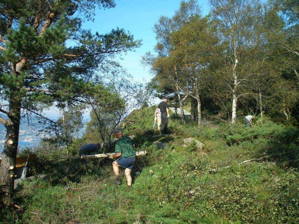 Søndre Kamvei rydding av skog 22-08-2.jpg