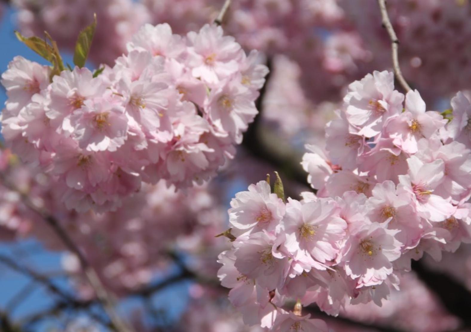 blomstring-sandvika.jpg