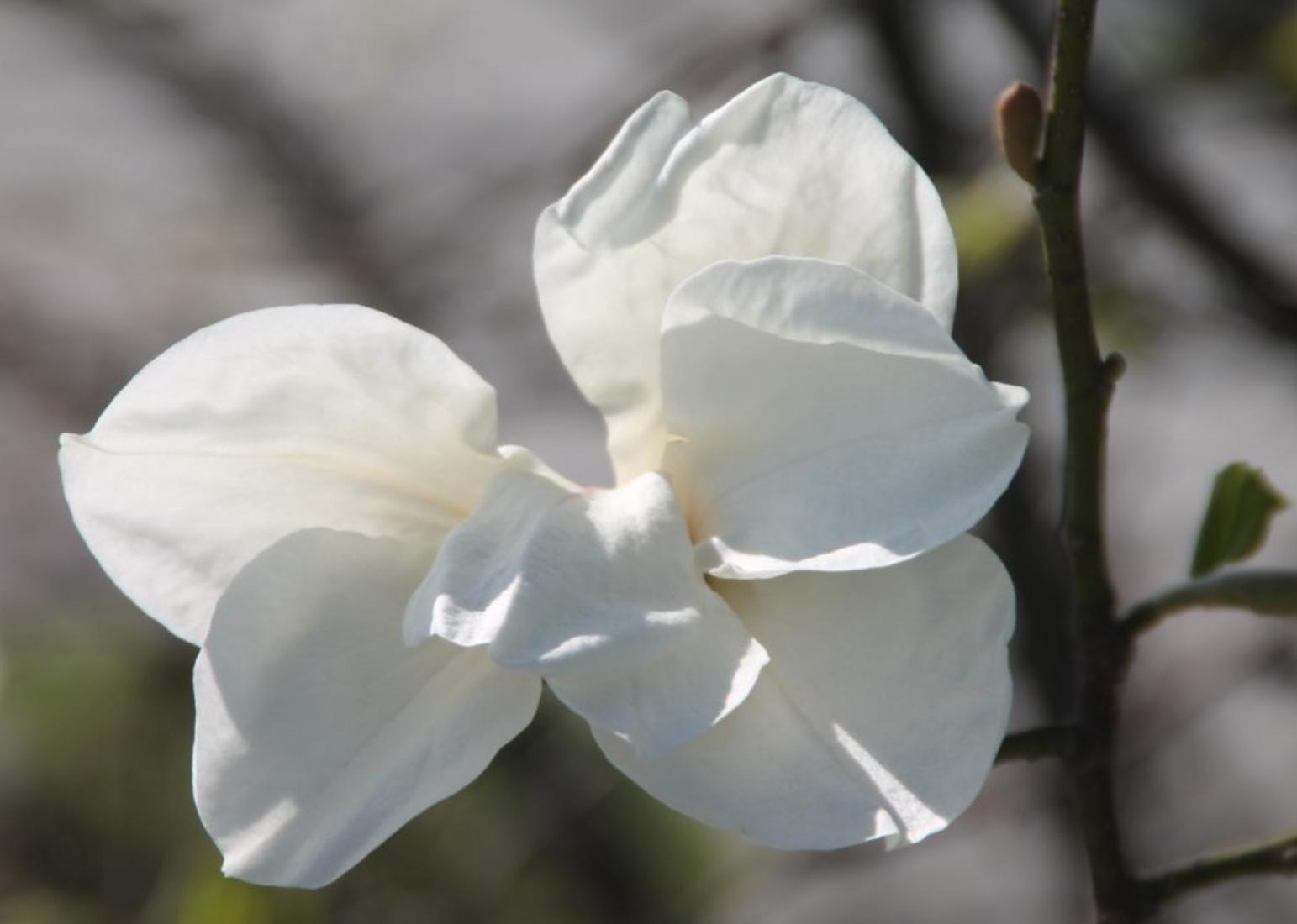 blomstring-sandvika2.jpg
