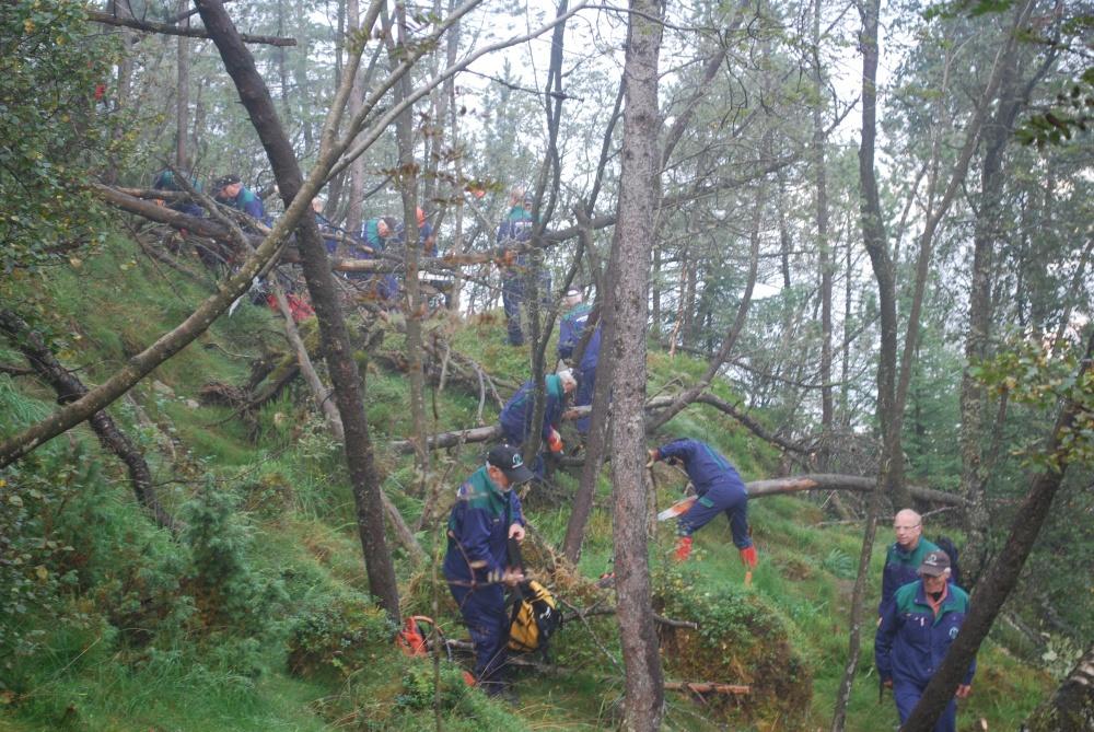 Gjenstridig skog ned mot Skredderdalen. 1.sept (fo